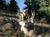 hunting-season-for-mule-deer-in-montana
