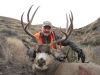 Mule Deer Hunting in Montana