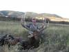 montana-deer-hunting