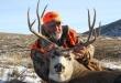 elk-deer-hunts-3